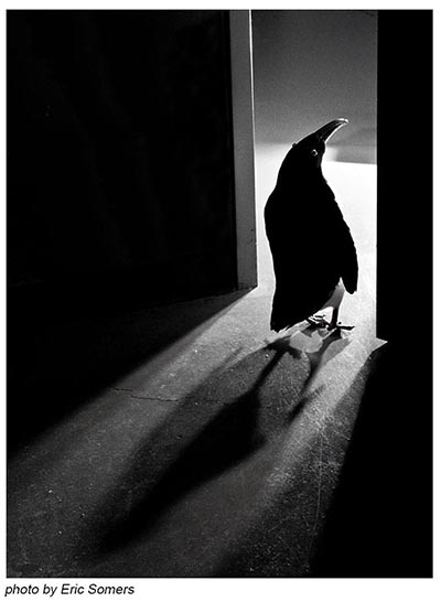 Picture of penguin at open door